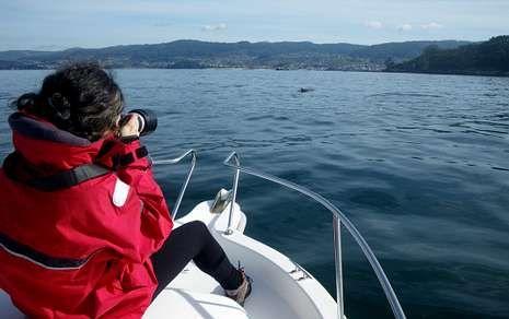 La playa, llena de cetáceos.Los biólogos del Cemma fotografían los arroaces cuando se adentran en la ría de Pontevedra.