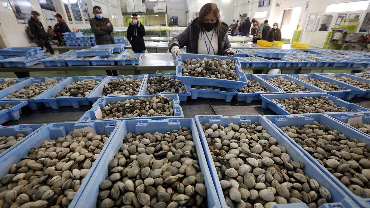 A Ostreira produce almeja autóctona en Malpica.Una corvina real o americana, una de las muchas especies de pescados y mariscos que Rogelio Santos graba en vídeo
