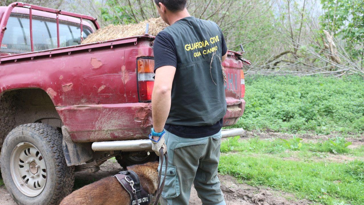 Inspección de la unidad canina del Seprona