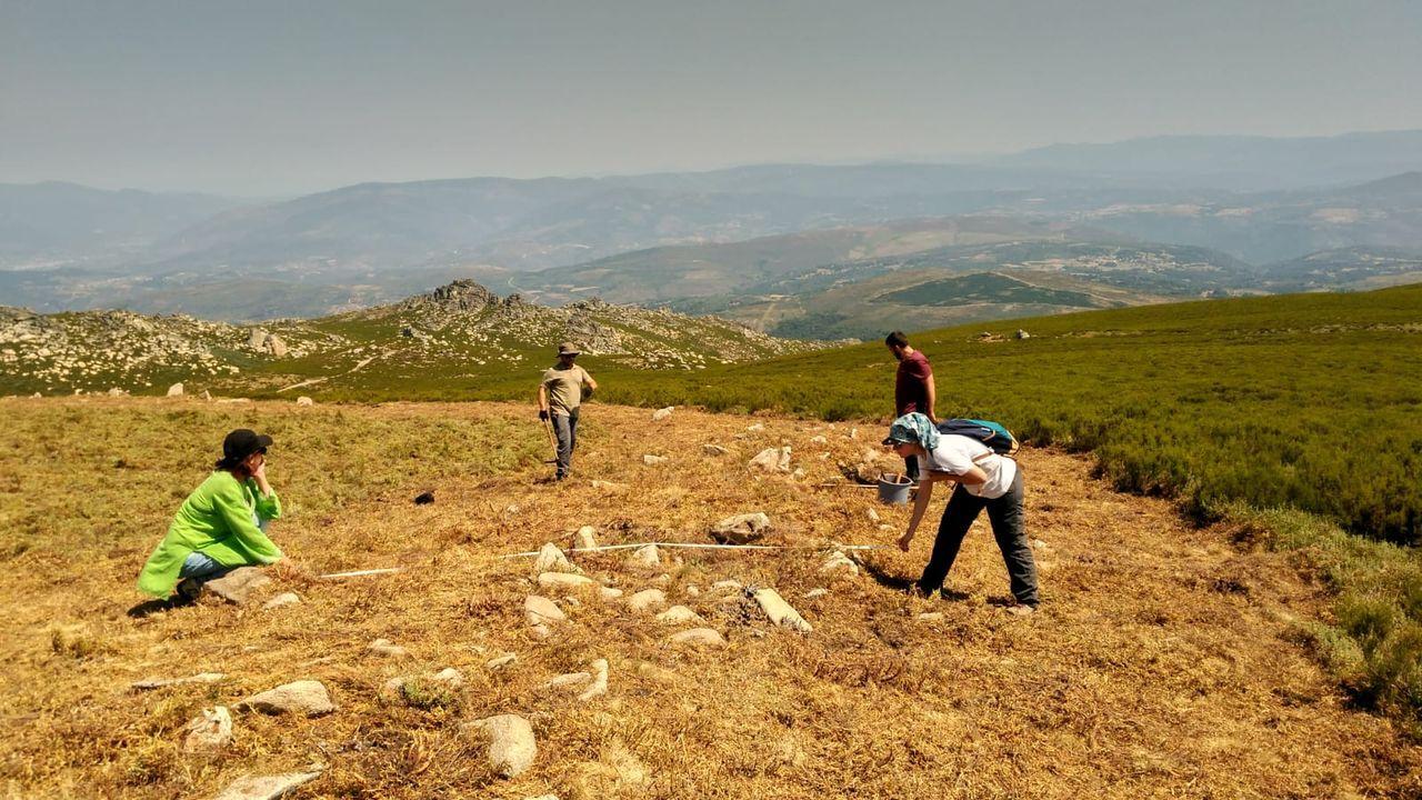 Las setas (en la imagen, en terrenos del municipio de O Corgo) son habituales en muchas zonas de Galicia
