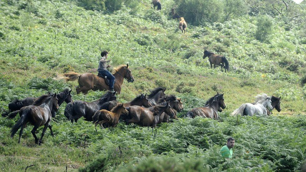 El caballo de raza gallega aún se conserva en distintas comarcas de Galicia