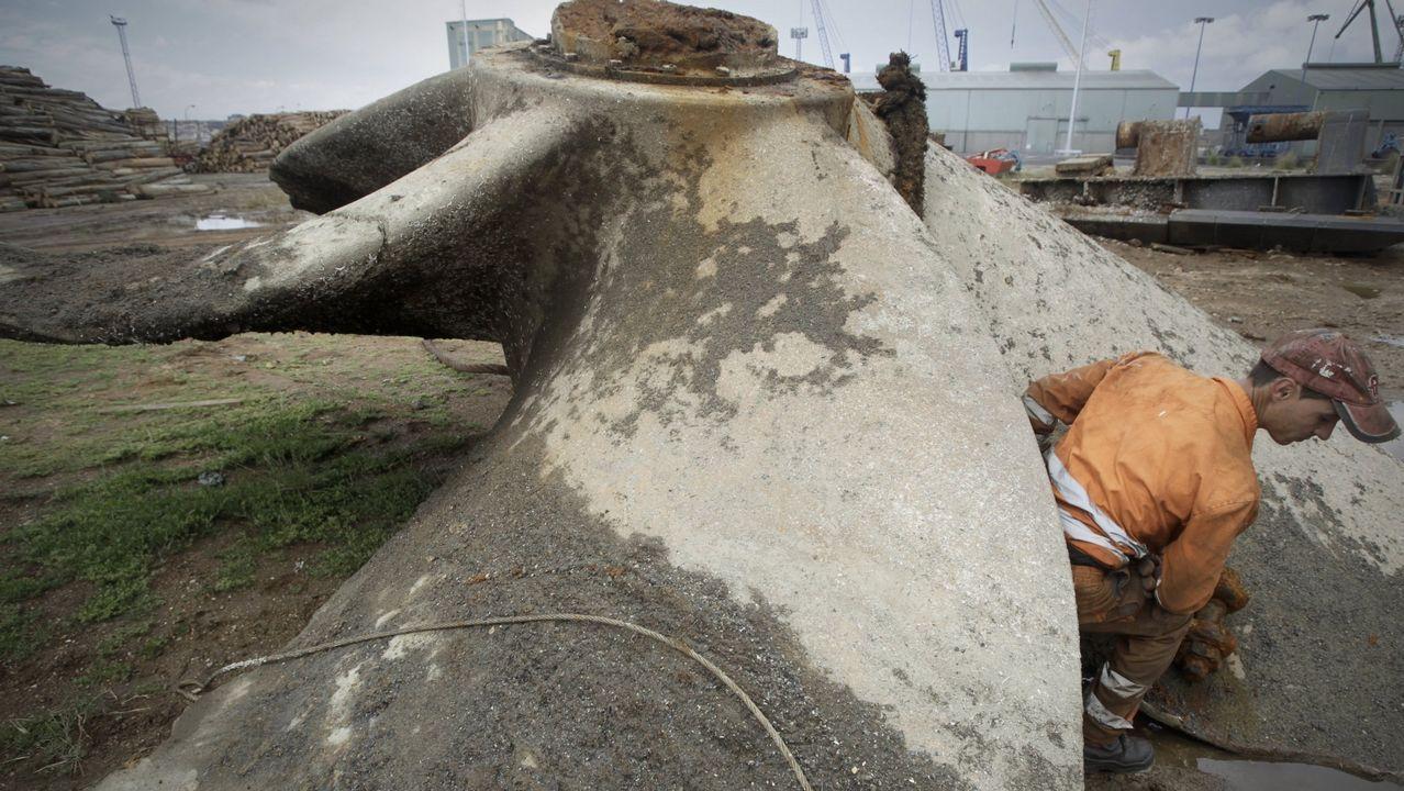 Las secuoyas de Colón ya miden 15 metros