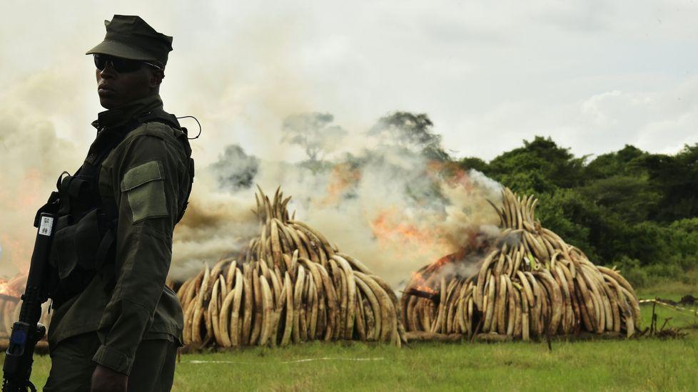 La fiebre del marfil amenaza a los elefantes africanos.Foni Díaz garda gran parte dos recordos das súas viaxes no seu piso da Illa de Arousa.