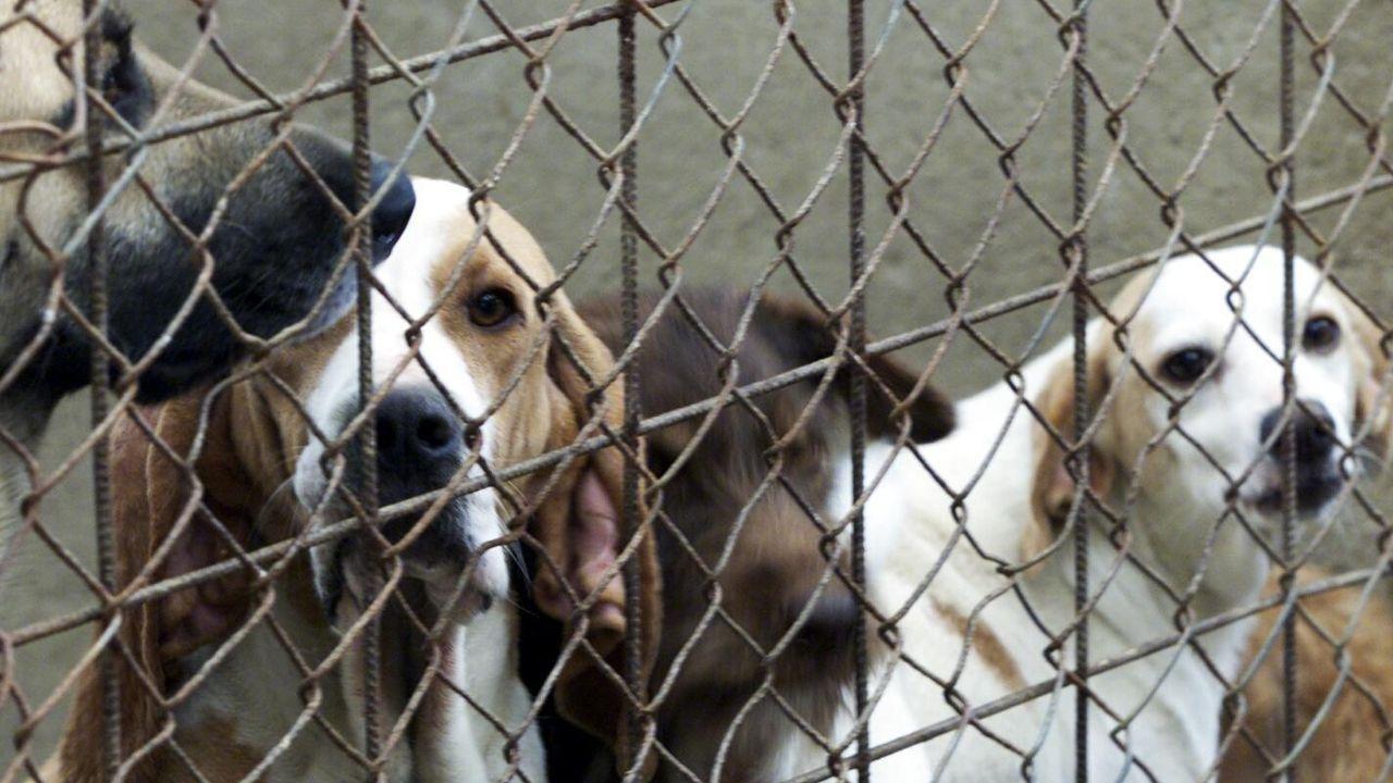 Dos perros en una de las jaulas del albergue de animales de Oviedo