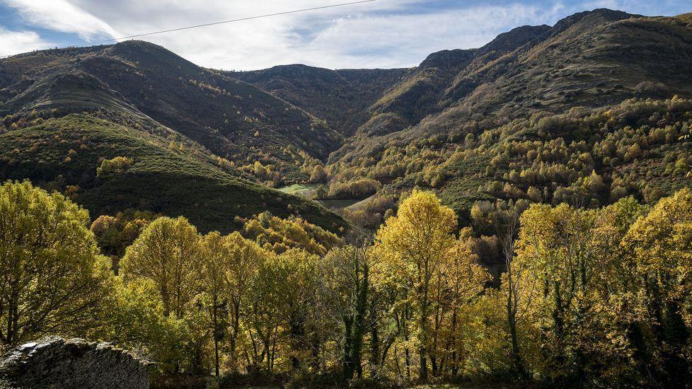 Las fotos de la ruta entre Samos y O Courel.El pino, fotografiado pocos minutos después de caer sobre las casas