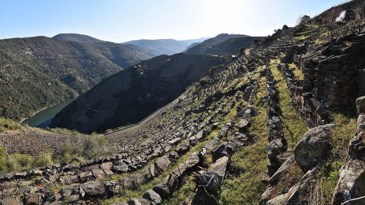Viñedos sobre bancales en la zona conocida como San Amaro