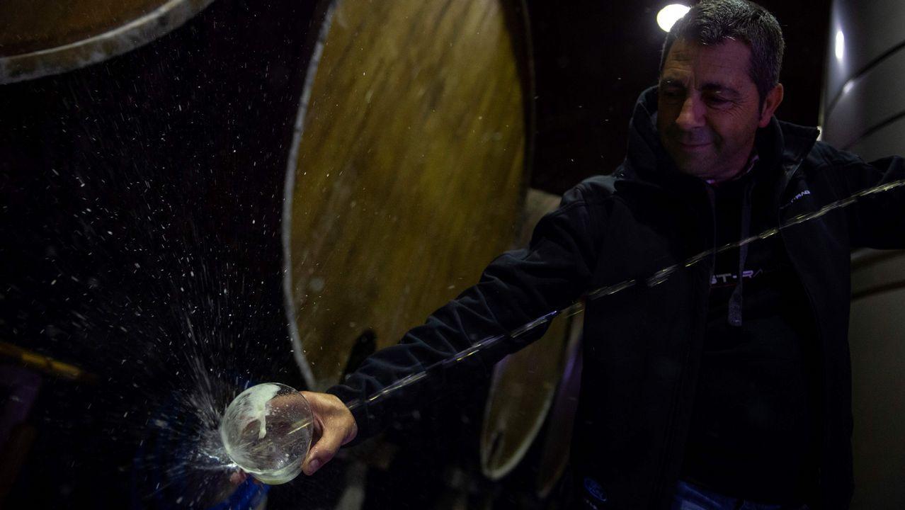 Queso cabrales.El proceso de tratamiento de la manzana y elaboración de la sidra en San Roman, Asturias
