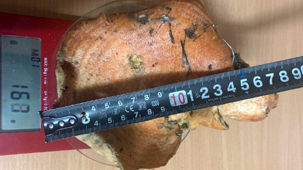 El sombrero del hongo, de 184 gramos de peso, tiene un diámetro de cerca de dieciocho centímetros