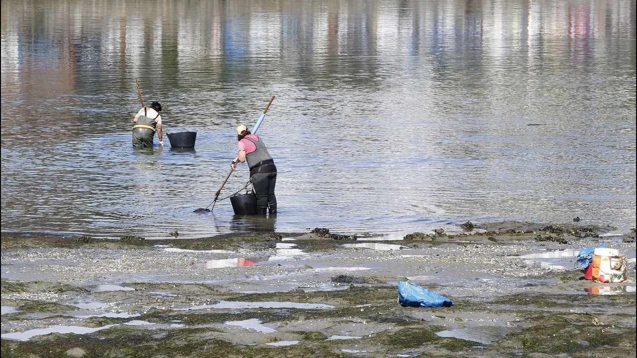 Las duras condiciones de las mariscadoras en fotos.Una docena de mariscadores volvieron ayer a tomar la ría de O Burgo, a plena luz del día.