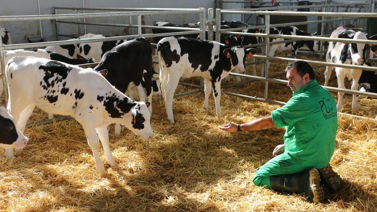 En la cooperativa de Fernández Villar, la comodidad y el bienestar de los animales son un objetivo prioritario