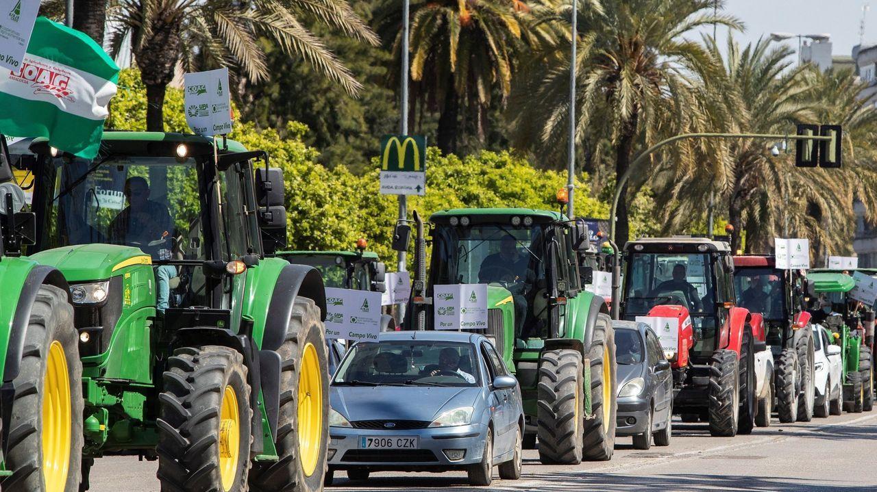 Un ejemplar de lobo.Imagen de una manifestación de agricultores en Jérez de la Frontera en marzo