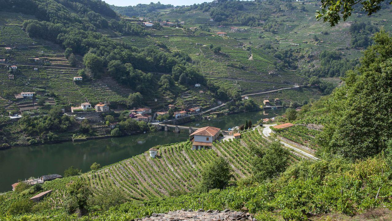 Los viñedos dominan el paisaje en las tierras que cruza la ruta