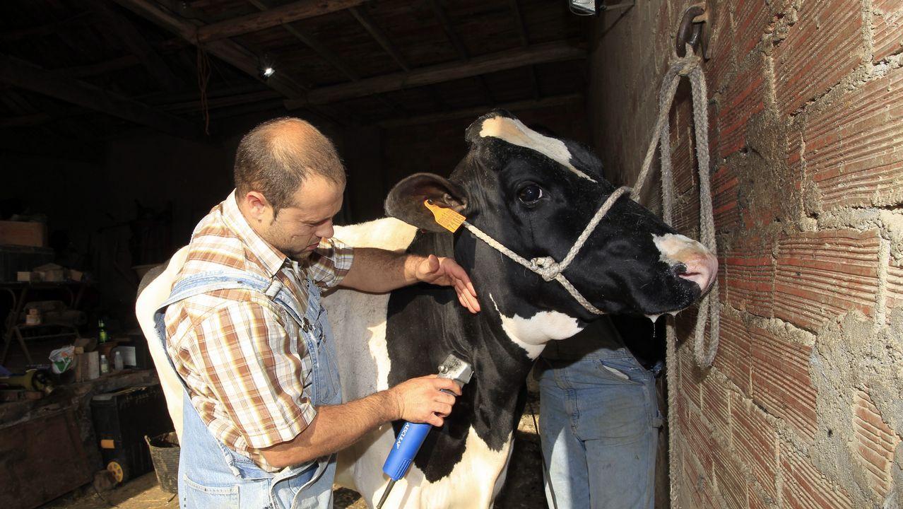 «Se subastan vacas. Razón: jubilación»