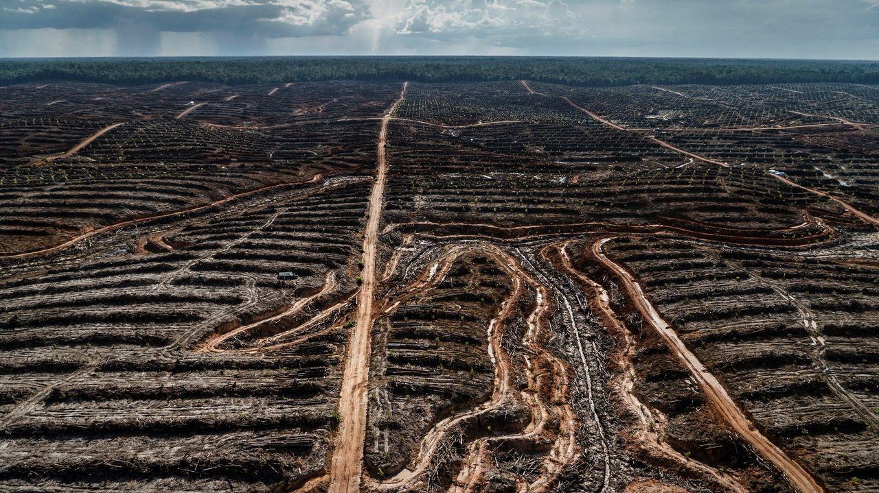 Imagen cedida por la organización ecologista Greenpeace, que denuncia la deforestación de una zona protegida en Indonesia
