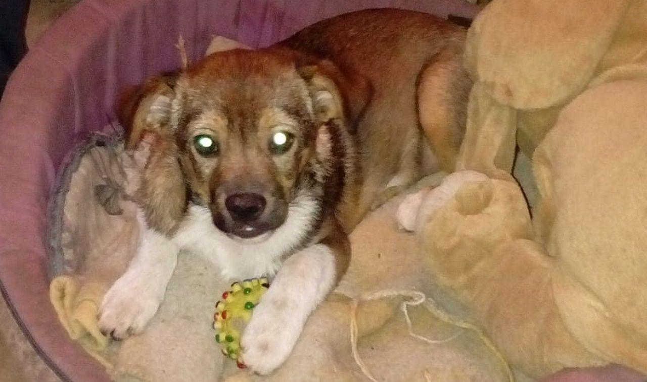 Lázaro fue el primer perro al que se le extrajo su ADN para ayudar a resolver un caso de maltrato animal en España..Rufino falleció hace tres semanas