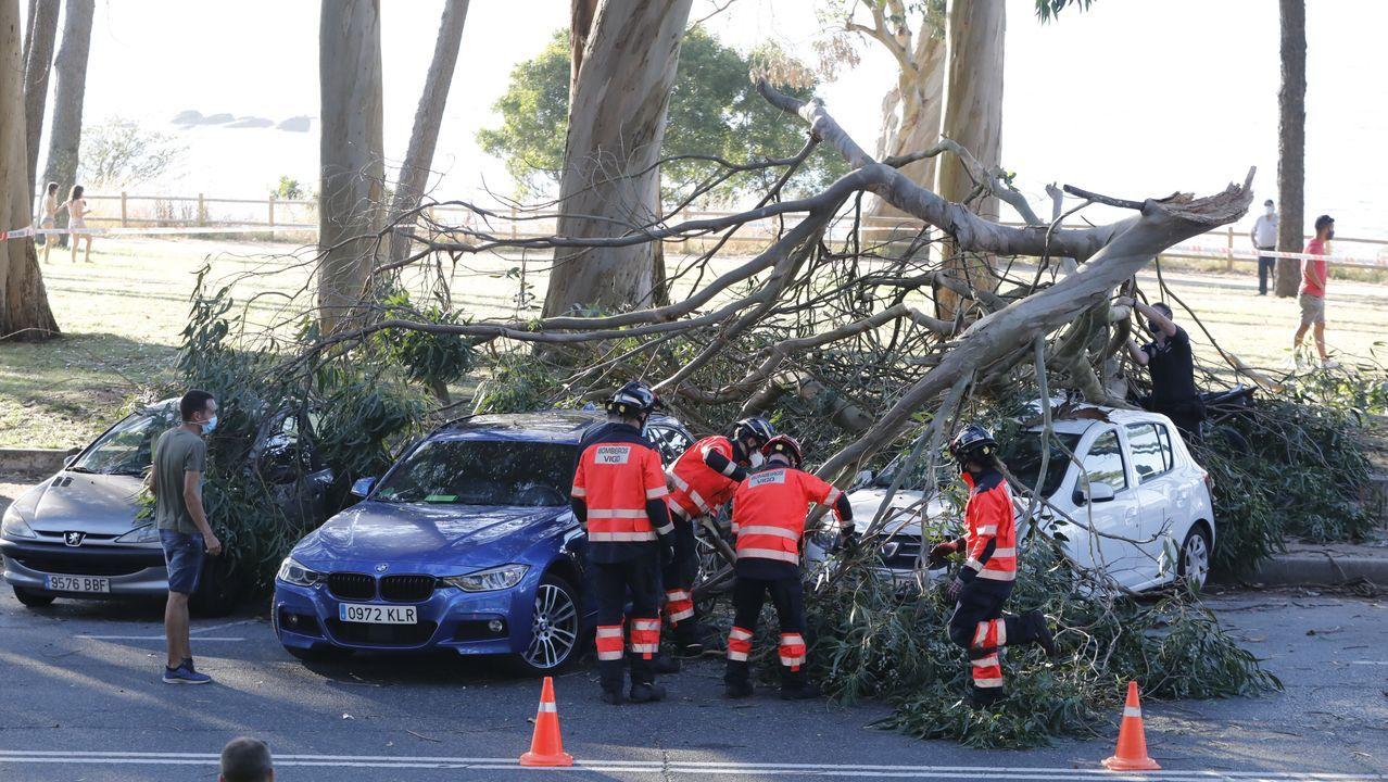 Susto en Samil al caer la rama de un árbol sobre dos vehículos estacionados