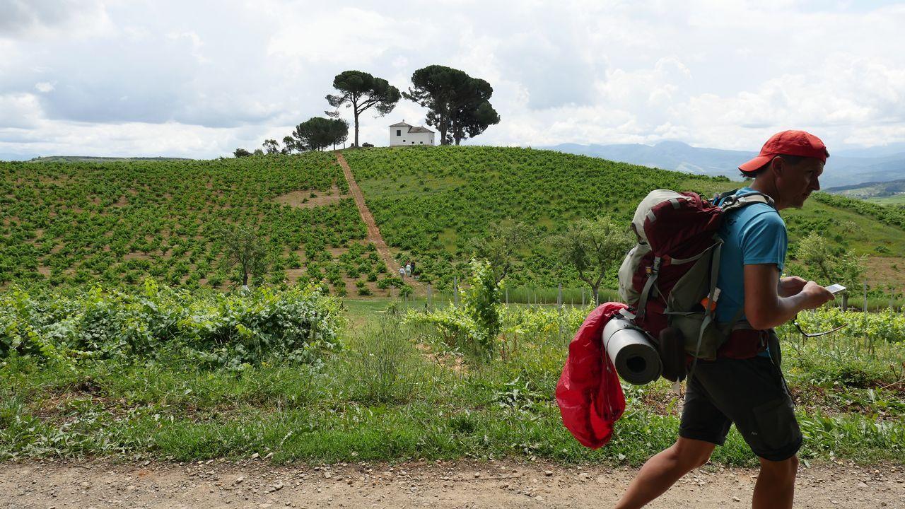 Llegada a Villafranca entre viñedos