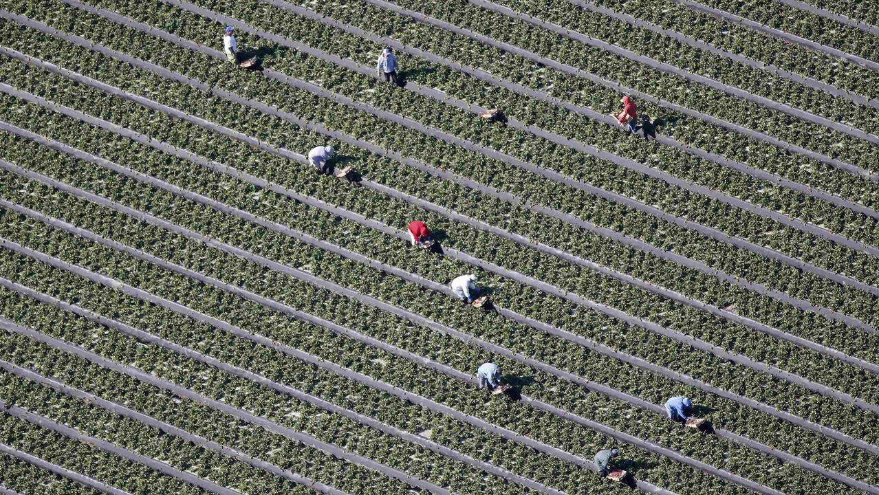 Vista aérea de un campo en Florida