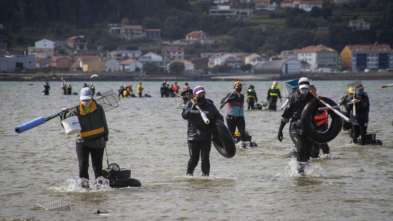 Las imágenes del libre marisqueo en Arousa.Así de turbias bajaban las aguas del río este viernes, a su paso por las Fragas do Eume