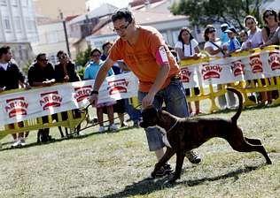 Una prueba del Certamen Nacional Canino, en Porto do Son.