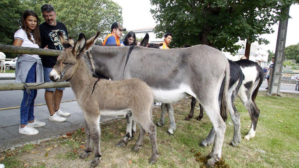 Participaron burros de todas las clases y tamaños