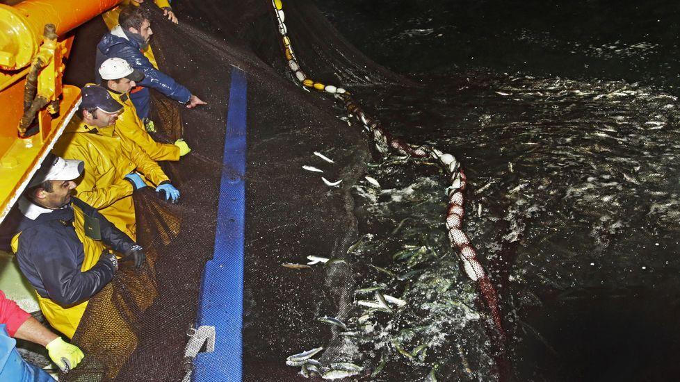 Los marineros devuelven la sardina al mar porque está en veda hasta marzo