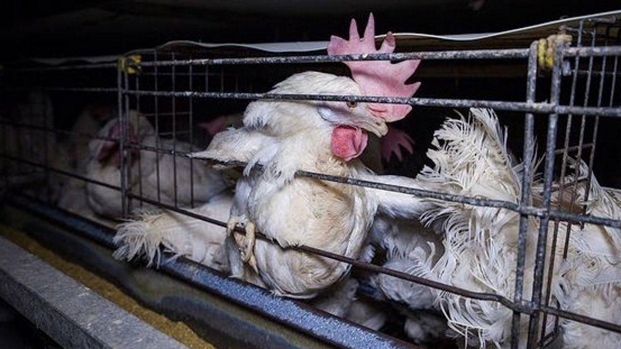 Buenos precios y buena afluencia de ganaderos caracterizaron la subasta de Adai