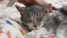 Gato abandonado en Olloniego