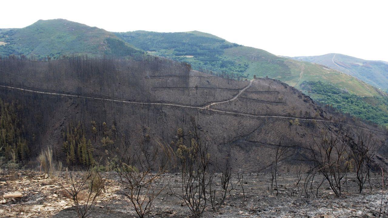 Incendio forestal en la zona de Ribeira, en Navia de Suarna, en el año 2015