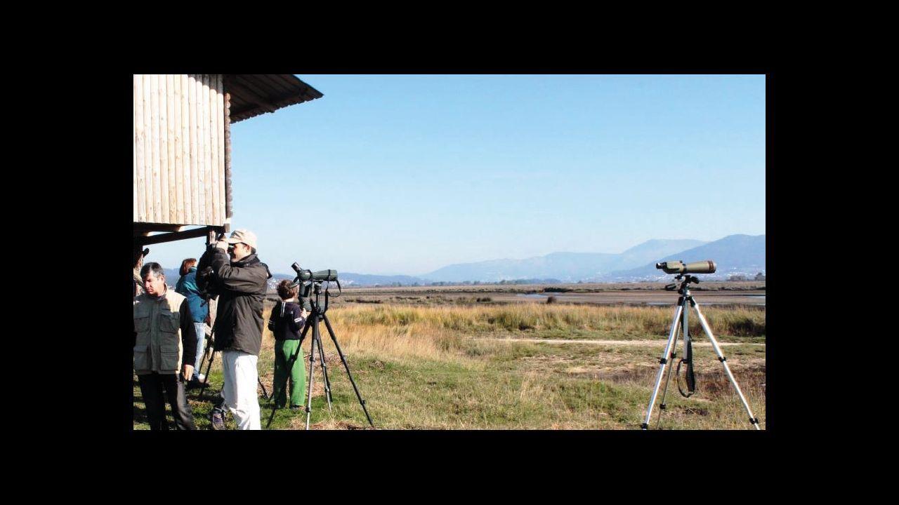 En moitos dos máis importantes humidais de Galicia construíronse sinxelos miradoiros ornitolóxicos desde os que é doado observar aves acuáticas