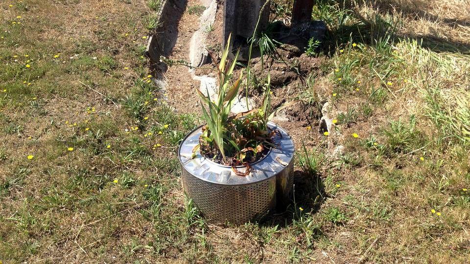 Maceta lavadora.En Boimente, Santa Comba, se encuentra este curioso ejemplar de marquesina, sin duda la especie más polimorfa del rural gallego