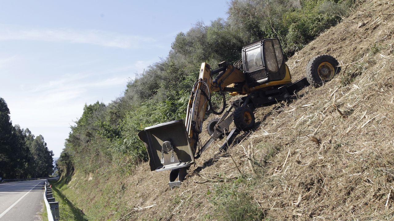 Imagen de archivo del desmantelamiento de una plantación de marihuana