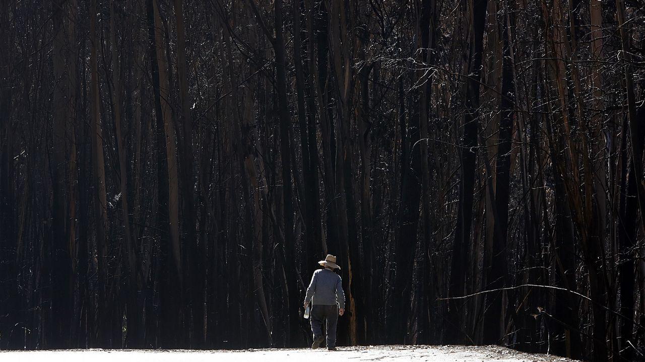 Ángeles y demonios en una tierra quemada y escarmentada.Incendio el pasado mes de mayo en Santiago