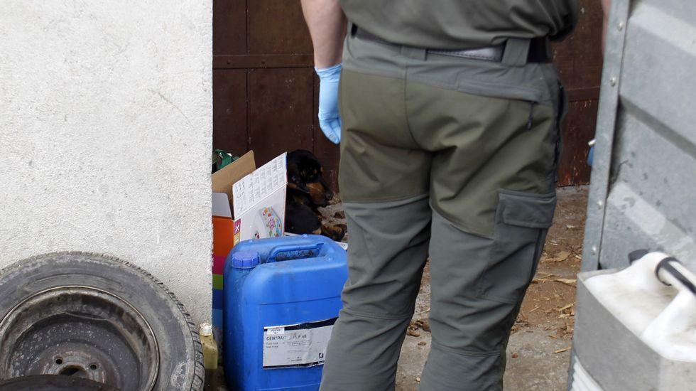 El perro fue encontrado ayer agazapado junto a la puerta de entrada de la que se supone que es su casa