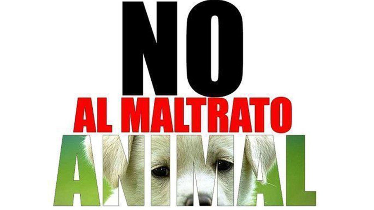Campaña contra el maltrato animal