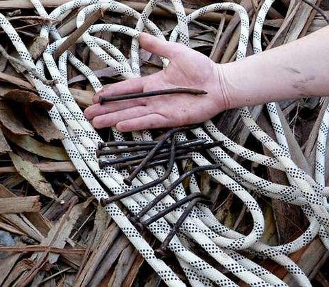 <span lang= es-es >Clavo a clavo</span>. Así escalan los alimañeros por los troncos de los árboles, valiéndose de las puntas que luego Axena y el Seprona recogen como pruebas para intentar localizar a los autores de los robos.