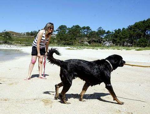 El año pasado, O Grove recibió numerosas felicitaciones por contar con una playa para perros.