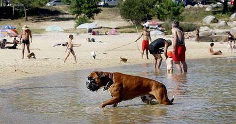 Hasta la playa canina de O Espiño (San Vicente) llegaron ayer bañistas y mascotas procedentes de toda Galicia.