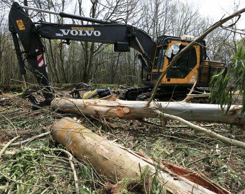 Un tronco de gran tamaño alcanzó al operario, que murió prácticamente en el acto.