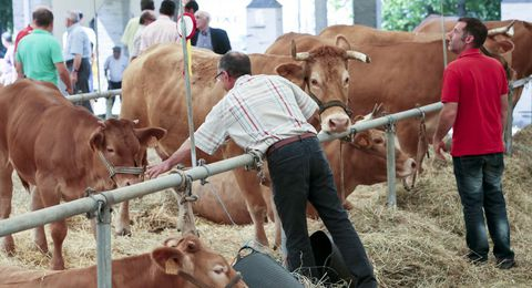 La exposición de ganado tuvo lugar en el recinto ferial y en carpas.