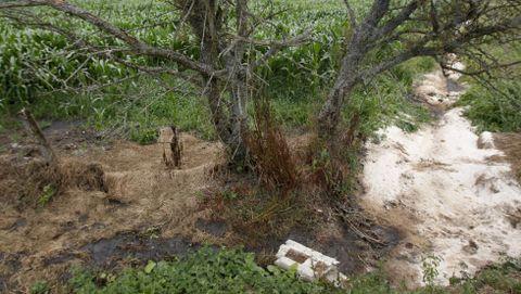 El vertido podría haber bajado por este canal y filtrase hasta el río.