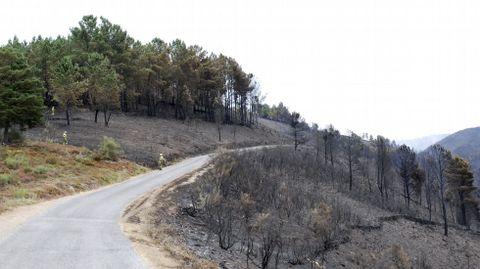 La carretera de acceso a la aldea de A Balsa no sirvió de cortafuegos