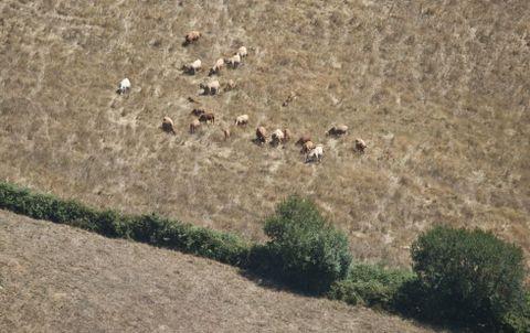 <span lang= es-es >El ganado se está quedando sin pasto en toda la provincia debido a la sequía. Esta foto fue tomada ayer en las cercanías de Paradavella, en A Fonsagrada. </span>