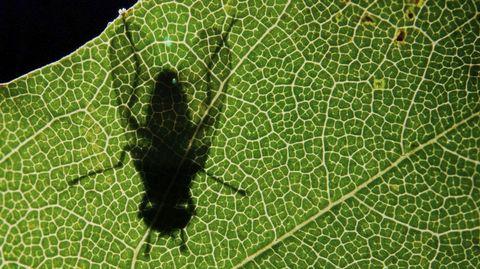 La sombra de una mosca se proyecta en una hoja al amanecer