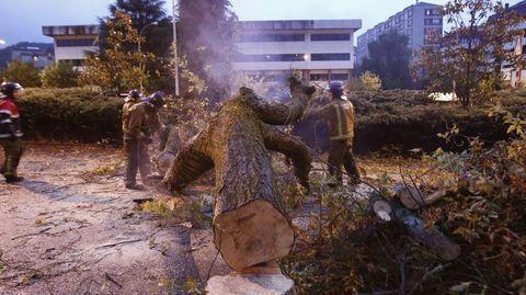 Los bomberos retiran un árbol caído por el viento en Ourense.