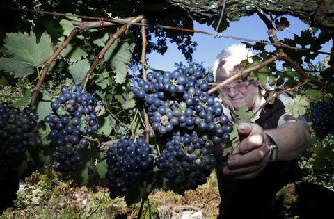 El bodeguero Antonio Saborido prevé producir más de tres mil litros de vino tinto.