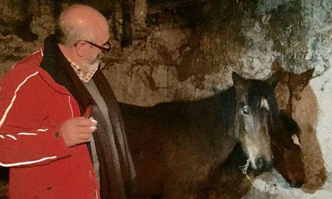 La yegua y el potro permanecen en una cuadra de la parroquia de Malvas.