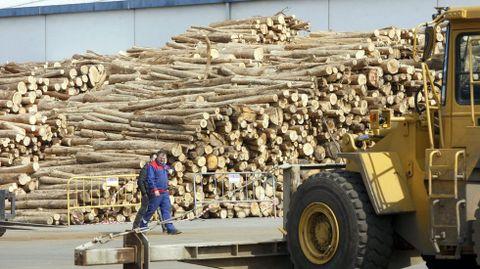 Operaciones con madera de eucalipto en el muelle interior