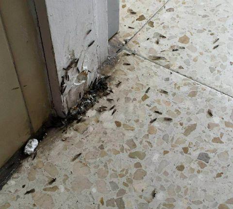Las termitas en el colegio.