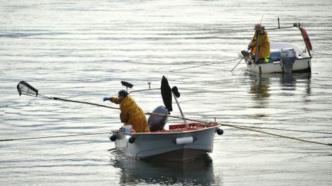 Mariscadores a flote en el banco de As Pías